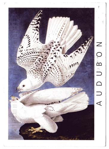 Audubon postcard